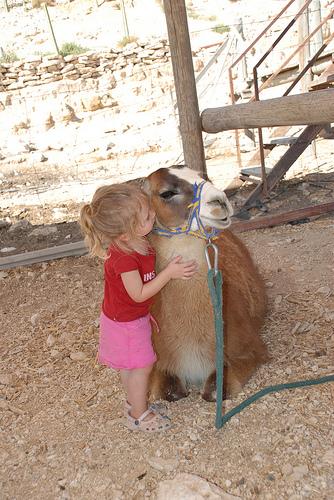 Llama_kiss.jpg