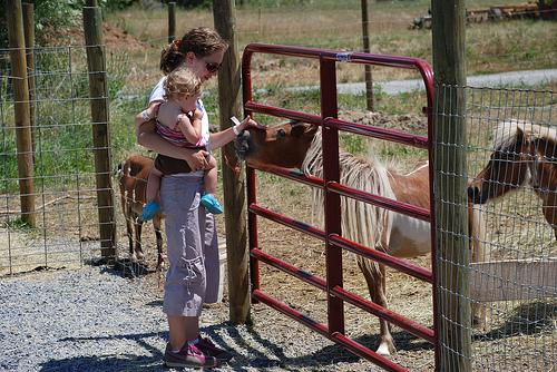 greatcountryfarms_horse.jpg