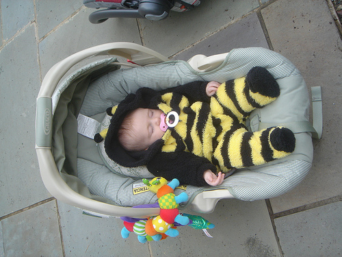 sleepy_bee.jpg
